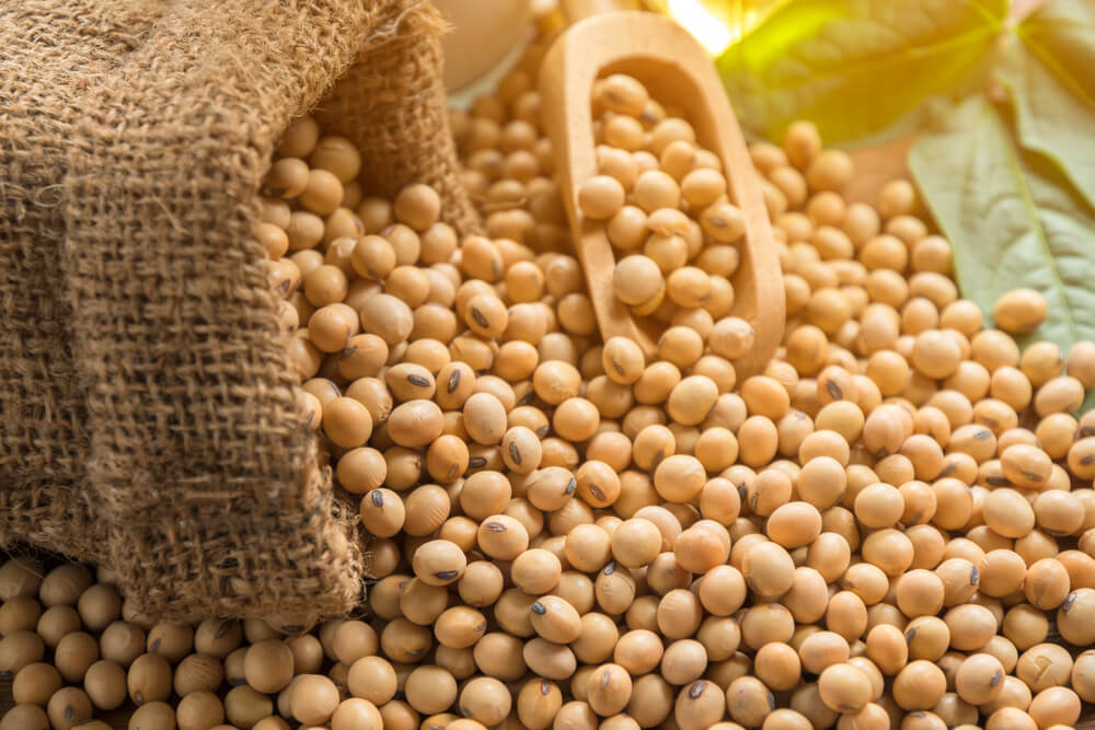 soybeans 5 healthy foods for summer idiotic world, summer fruits and vegetables in india, Healthy summer foods, Healthy foods in summer, top 10 summer foods, summer eating tips, vegetables of summer, fruits in summer season in india, summer foods in india,